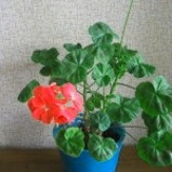cvety-zimoj