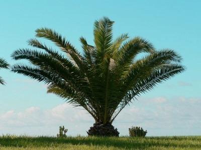 udivlyaet-nas-palma