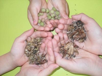 semena (2)